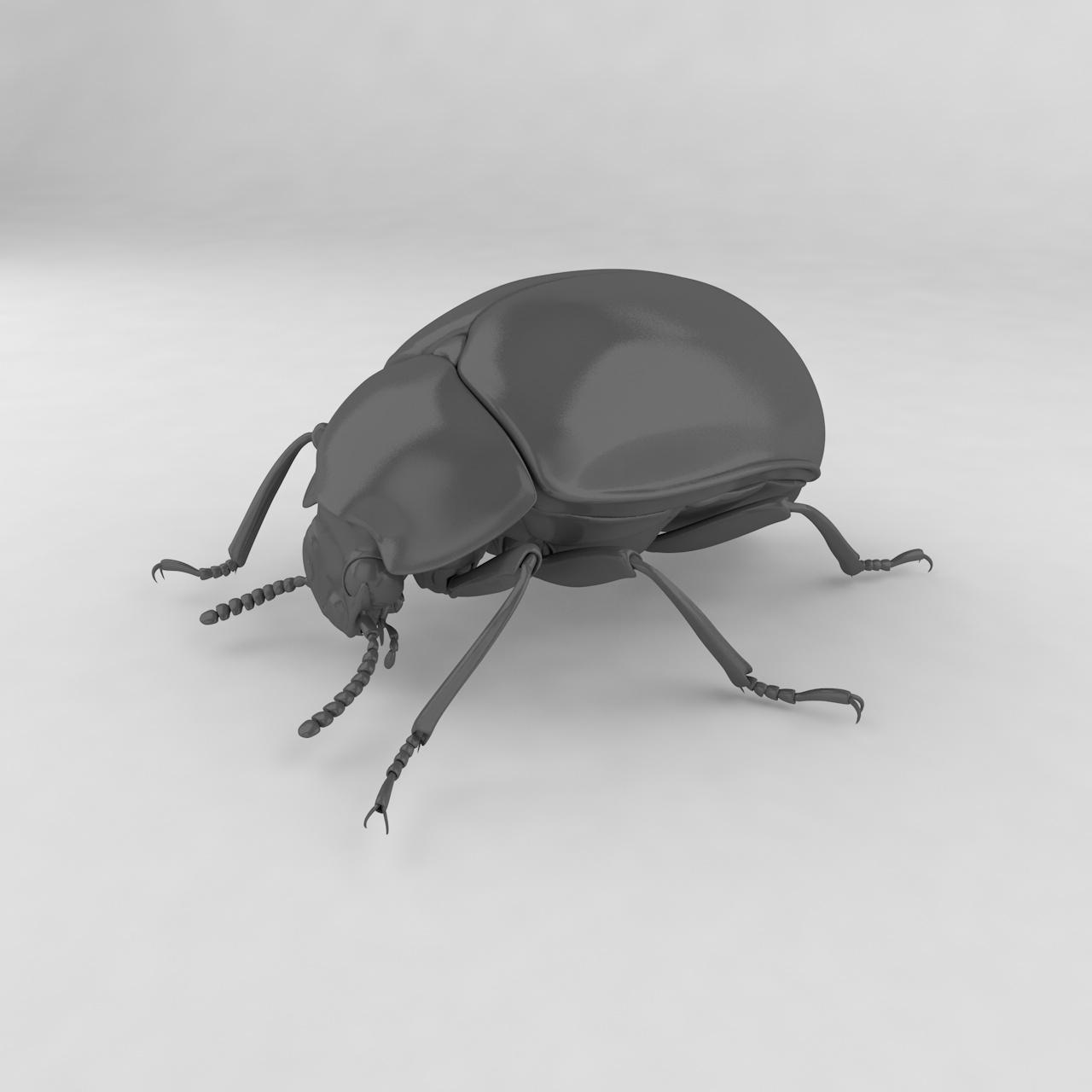 Диаперис левиси инсект беетлес 3д модел