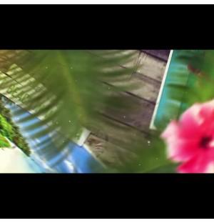tropical journey slideshow