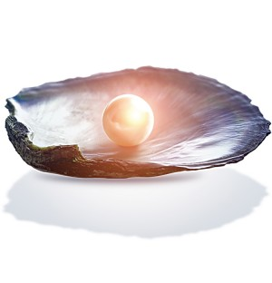 Pearl with Clamshell Transparent png
