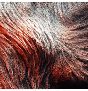 C4D Animal Hair Animation