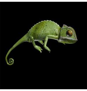 Chameleon rigged animated 3d model