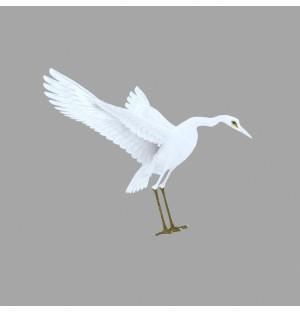 Egret 3D Model Animation