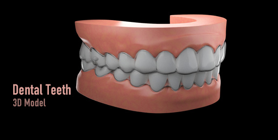 dental teeth 3d model