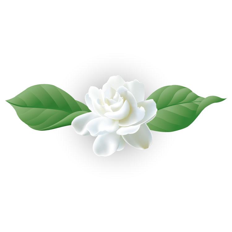 Jasmine Flower AI Vector