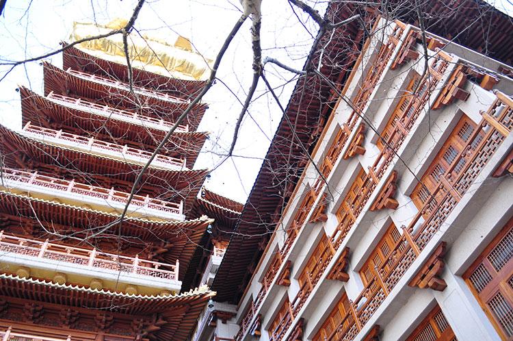 jingan temple tree