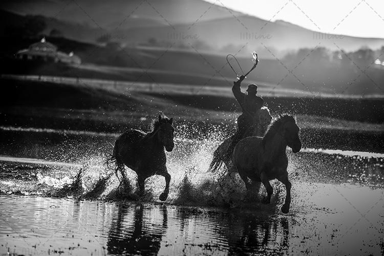 wrangler running race horse black white