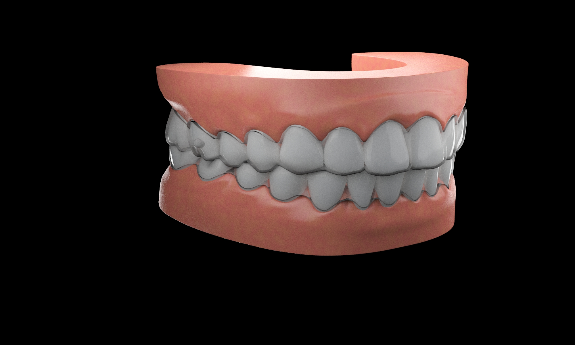 Simulation Denture Adult Teeth 3d Model 3D Model