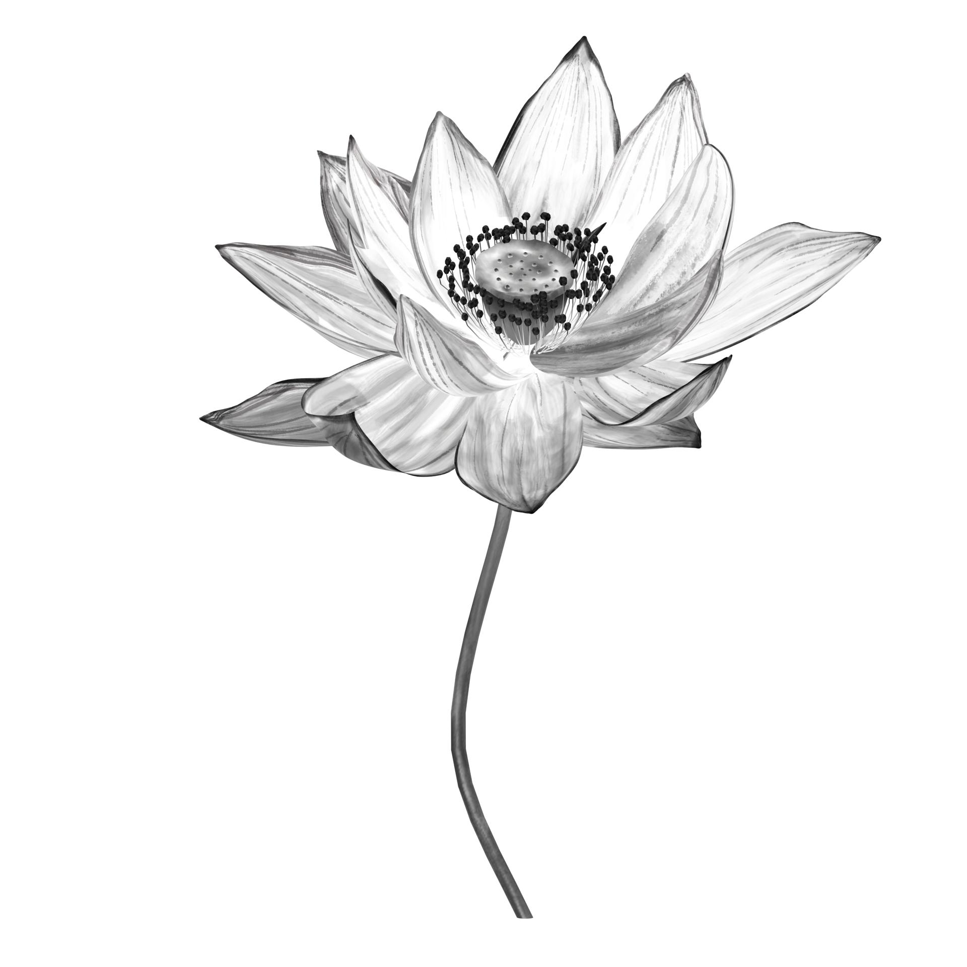 Ink material lotus three-dimensional model