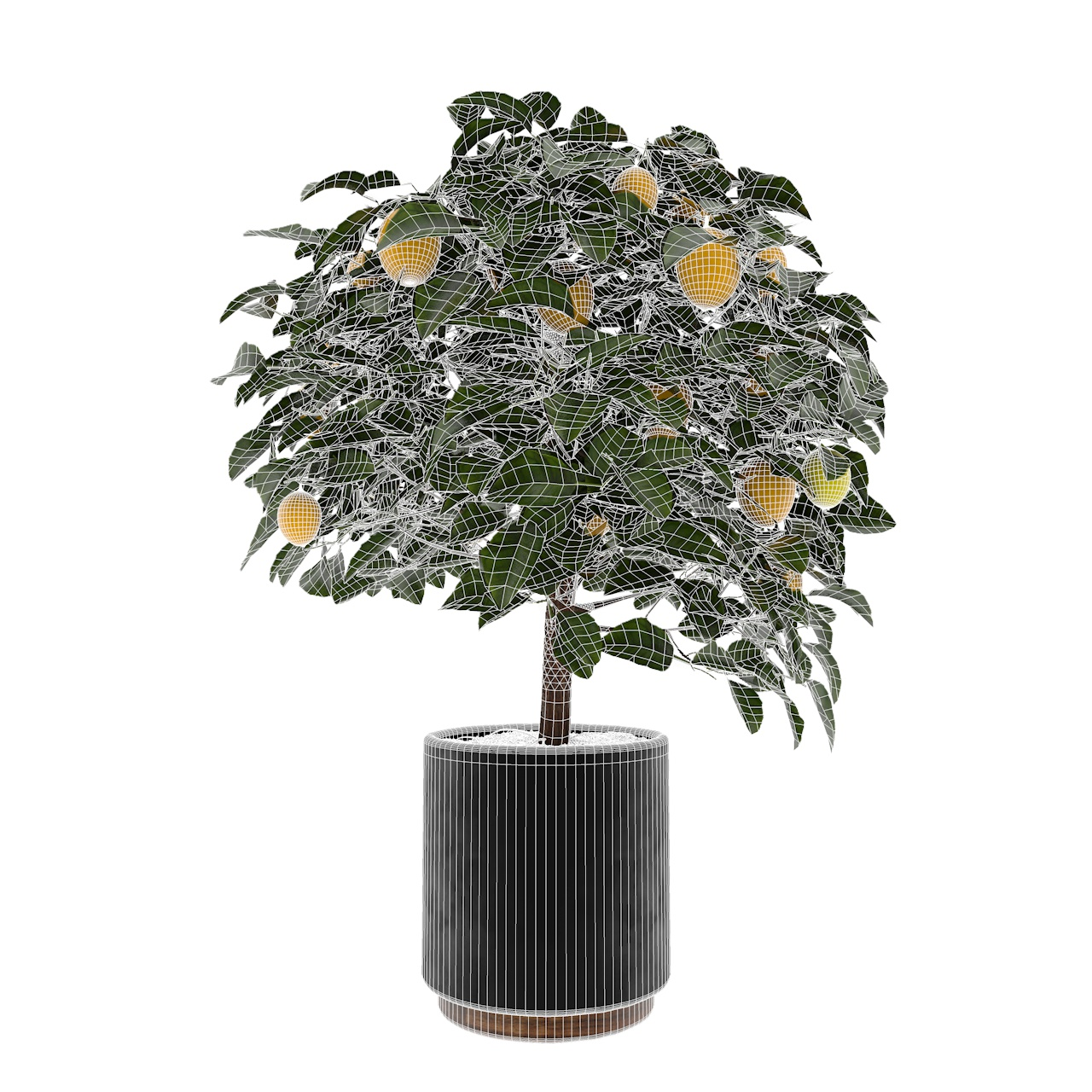 Lemon Tree 3d model