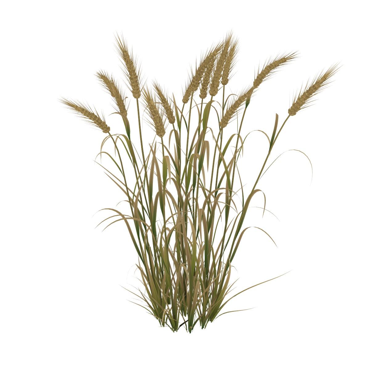 Wheat 3d model vray