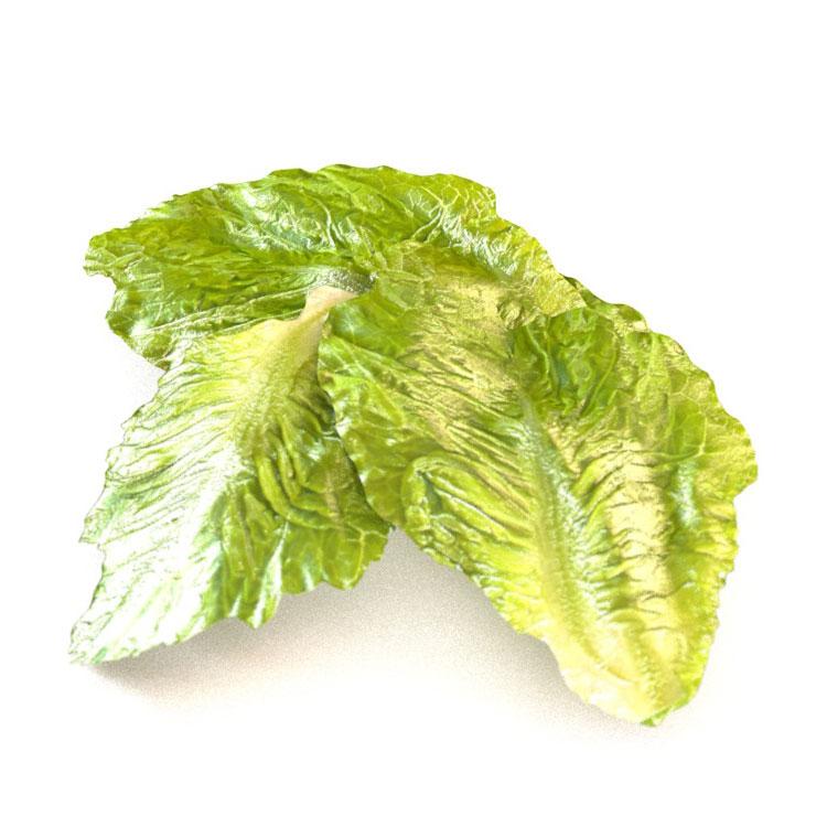 Romaine Lettuce 3d model vegetables leafy greens