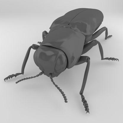 Agrilus modèle 3D