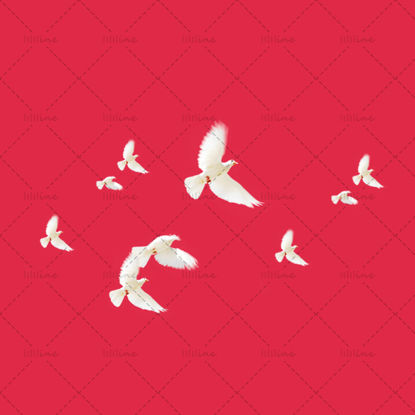 صورة Dove transparent png psd