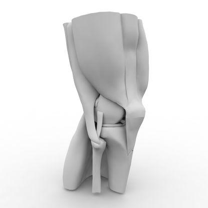 Изображение 3d модель мышц коленного сустава