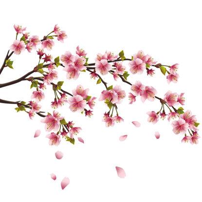 Vettore di AI di elementi del fiore della pesca dei fiori