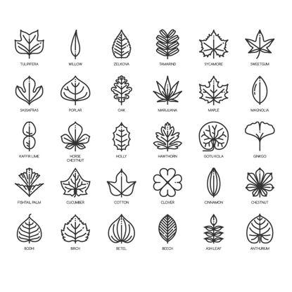 Colección de iconos de hojas AI Vector