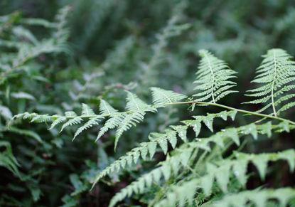 Ein leichtes Schwappen von grünen Blättern