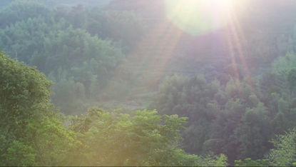 Luftbildseen und -wälder morgens des hellen Sonnenscheins