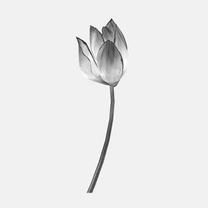 Ink material lotus 3d model
