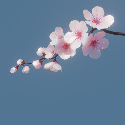 Cherry blossom branch 3d model and animation