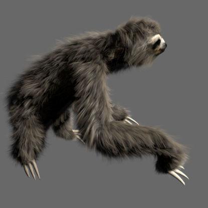 Sloth 3d model