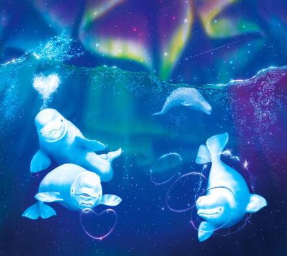 Beluga whales swimming in the arctic sea
