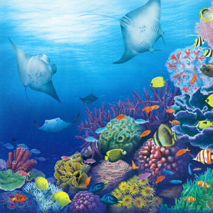 Coral reef  illustration