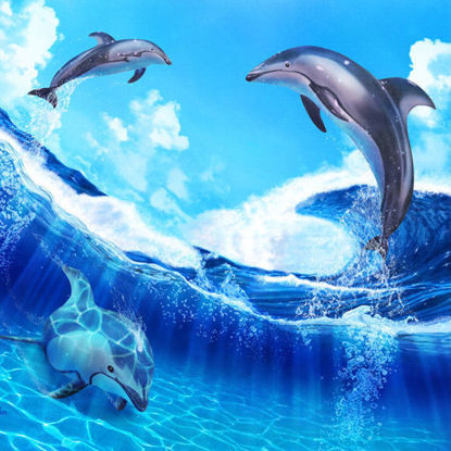Dolphin II