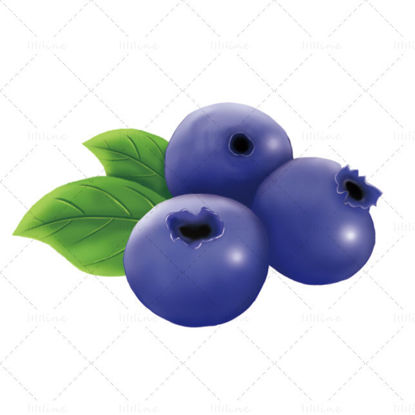 Blueberry illustration