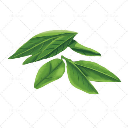 Tea leaves illustration