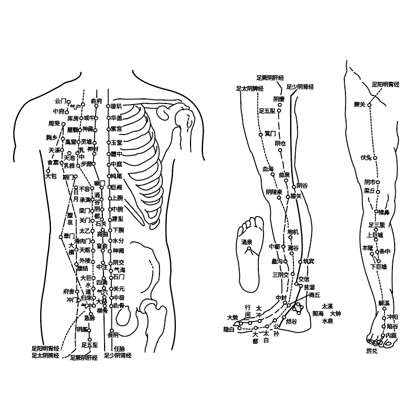 Chinese acupuncture vector elements