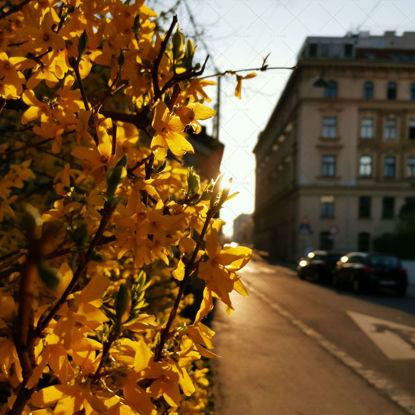 Wien Strasse