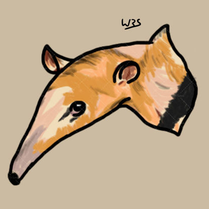 Southern tamandua (Tamandua tetradactyla) illustration