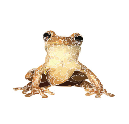 Frog illustration vector and png