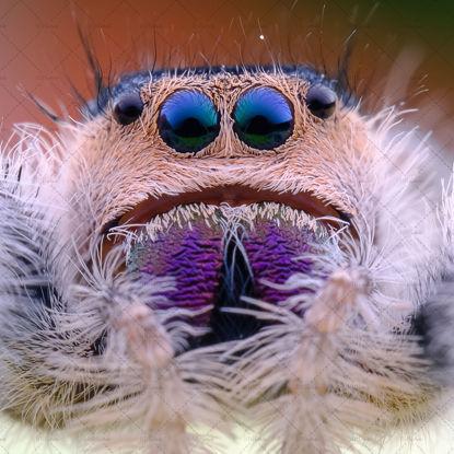 Fluff spider photo