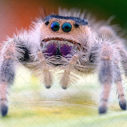 Spider looking at you photo