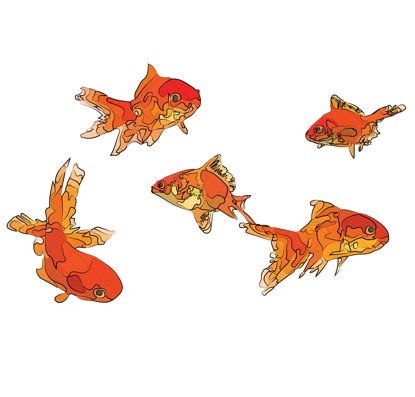 goldfish illustration vector and png