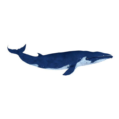 Rigged Animated Whale 3D Model