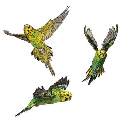 bird illustration png