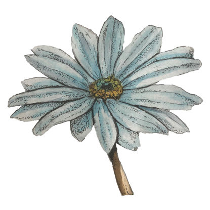 Blue flower illustration png