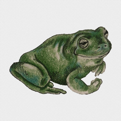 Frog illustration watercolour