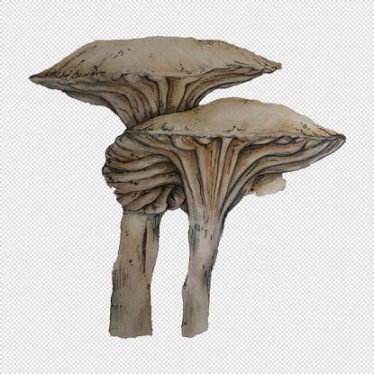 Mushroom png illustration