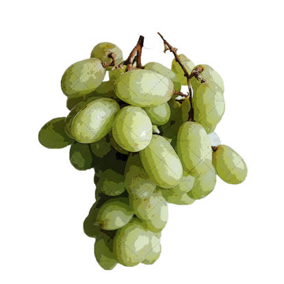 Grape hand drawn illustration png
