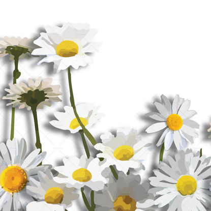 Daisy flower border digital illustration png