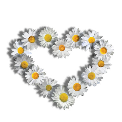 Daisy flower heart digital illustration png