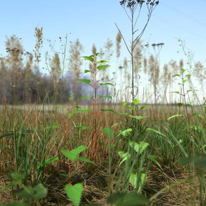 Grass Leaf Starwort Meadow 3d model Patch