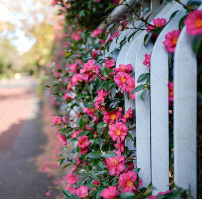 Red Camellia Flower Corridor photo