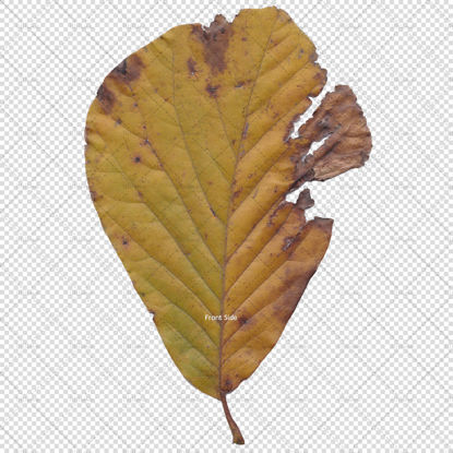 Autumn fallen leaves png