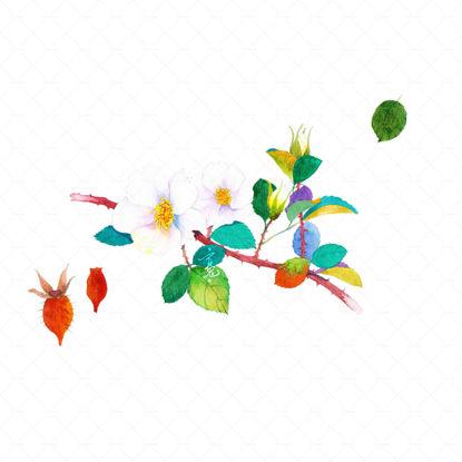 Jin yingzi plant flower Watercolor