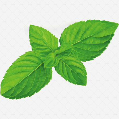 Real peppermint leaf photography